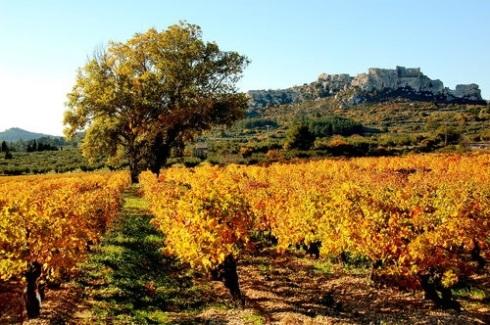 vinhos-rose-provence2