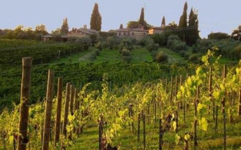 vinhos-rose-toscana1